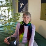 United States: elders globally in favour of cannabis for therapeutical use
