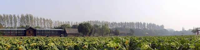 Rural area China